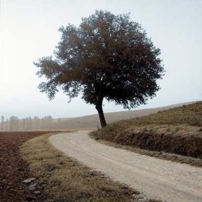 Tuscany #12-Alan Blaustein-Photographic Print