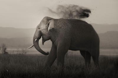 Tusker in Rain-Ganesh H Shankar-Photographic Print