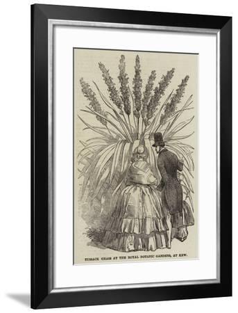 Tussack Grass at the Royal Botanic Gardens, at Kew--Framed Giclee Print