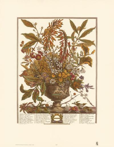 Twelve Months of Flowers, 1730, January-Robert Furber-Art Print
