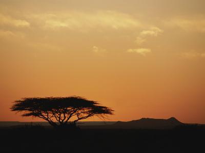 Twilight View of a Lone Tree on the Savanna-Kenneth Garrett-Photographic Print