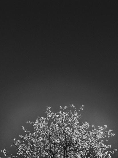 Twinkling Lights 1-Design Fabrikken-Photographic Print