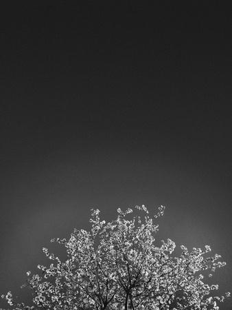 https://imgc.artprintimages.com/img/print/twinkling-lights-1_u-l-q1g65220.jpg?p=0