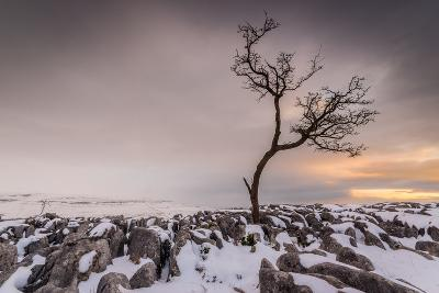 Twistleton Scar End in Snow, Ingleton, Yorkshire Dales, Yorkshire, England, United Kingdom, Europe-Bill Ward-Photographic Print