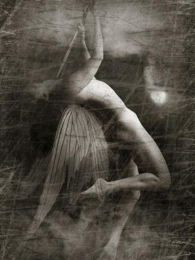 Twitterzoom-Lynne Davies-Photographic Print