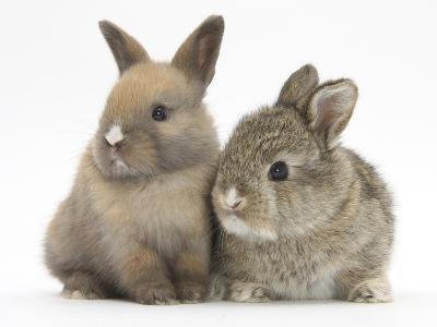 Two Baby Rabbits-Mark Taylor-Photographic Print