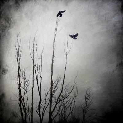 Two Bird Flying Near a Tree-Luis Beltran-Photographic Print
