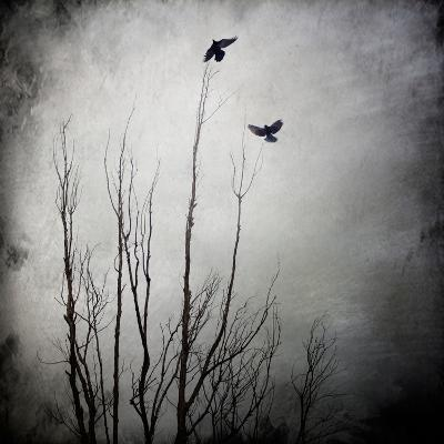 Two Bird Flying Near a Tree-Trigger Image-Photographic Print