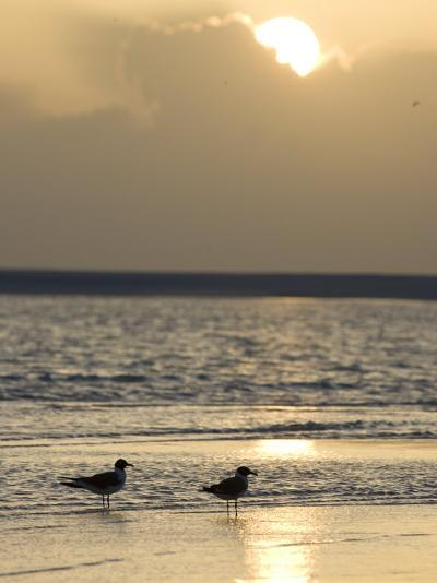 Two Birds on a Sandy Beach at Sunset-Roy Toft-Photographic Print