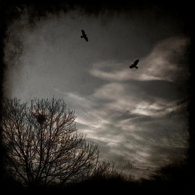 Two Birds Retum to Nest at Dusk-Luis Beltran-Photographic Print