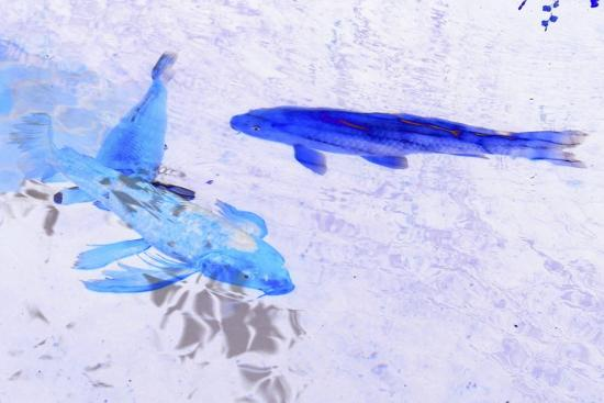 Two Blue Fish-Tom Kelly-Giclee Print