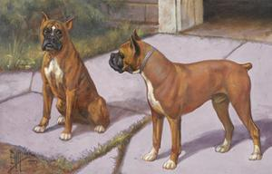 Two Boxer Dogs, known for their Agility, Eye Each Other