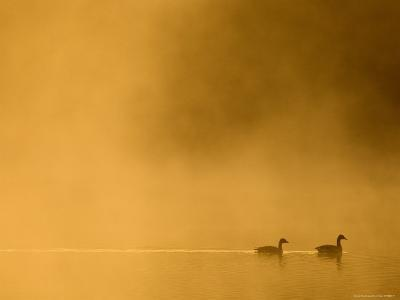 Two Canada Geese on a Lake at Sunrise-Guylain Doyle-Photographic Print