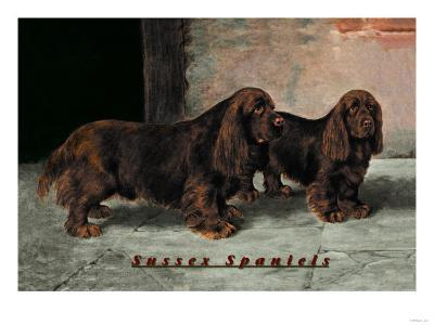 Two Champion Sussex Spaniels--Art Print