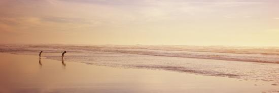 Two Children Playing on the Beach, San Francisco, California, USA--Photographic Print