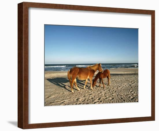Two Chincoteague Ponies Stand Close Together on the Beach-James P. Blair-Framed Photographic Print