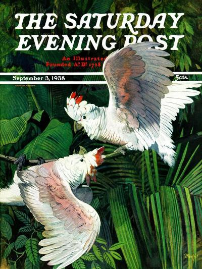 """""""Two Cockatoos,"""" Saturday Evening Post Cover, September 3, 1938-Julius Moessel-Giclee Print"""