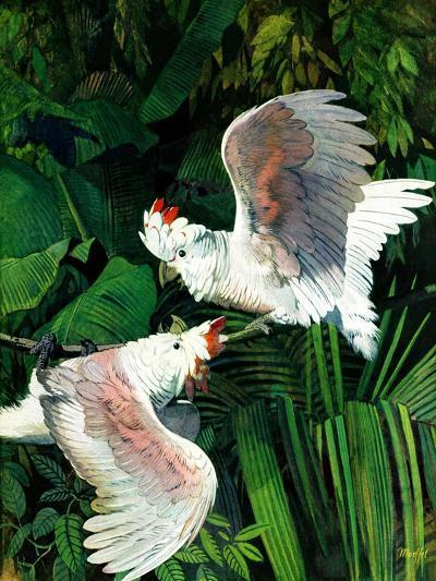"""""""Two Cockatoos,""""September 3, 1938-Julius Moessel-Giclee Print"""