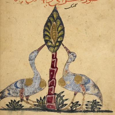 Two Cranes-Aristotle ibn Bakhtishu-Giclee Print