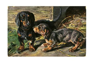 Two Dachshunds Sitting on Straw