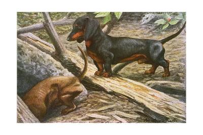 Two Dachshunds--Giclee Print