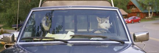 Two Dogs in a Pick-Up Truck, Main Street, Talkeetna, Alaska, USA--Photographic Print