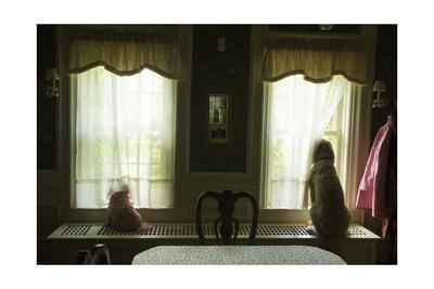 https://imgc.artprintimages.com/img/print/two-dogs-look-out-the-windows-of-a-home-in-lincoln-nebraska_u-l-poloxi0.jpg?p=0