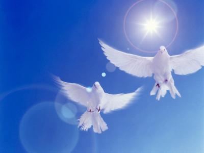 Two Doves Side by Side with Wings Outstretched in Flight with Brilliant Light And Blue Sky--Photographic Print