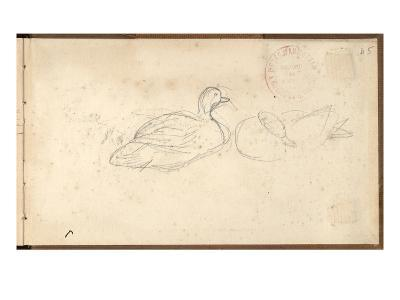 Two Ducks (Pencil on Paper)-Claude Monet-Giclee Print