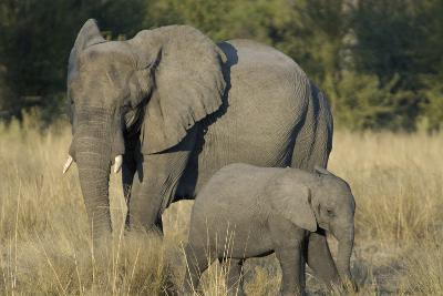 Two Elephants, Adult and Calf, Upper Vumbura Plains, Botswana-Anne Keiser-Photographic Print