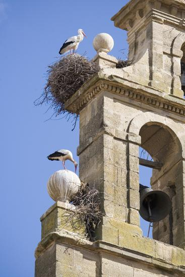 Two European White Storks and their Nests on Convent Bell Tower, Santo Domingo, La Rioja, Spain-Nick Servian-Photographic Print