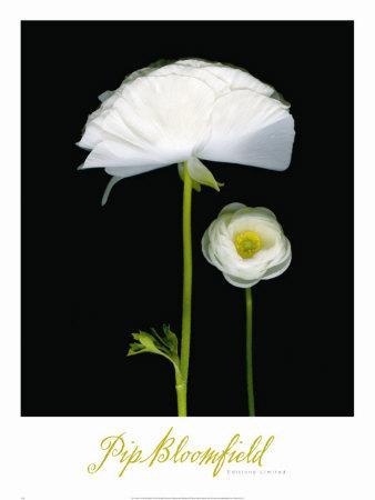 https://imgc.artprintimages.com/img/print/two-friends-i_u-l-f1kn4m0.jpg?p=0