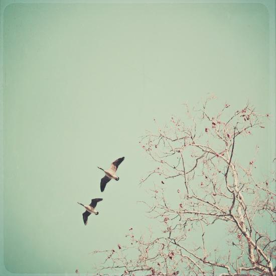 Two Geese Migrating-Laura Ruth-Photographic Print