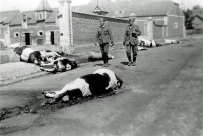 Two German Soldiers Among a Herd of Dead Cows in Front of a Farm--Photographic Print