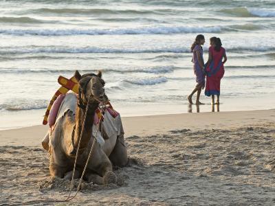 Two Girls on Beach at Dusk, Camel Waiting, Ganpatipule, Karnataka, India, Asia-Annie Owen-Photographic Print