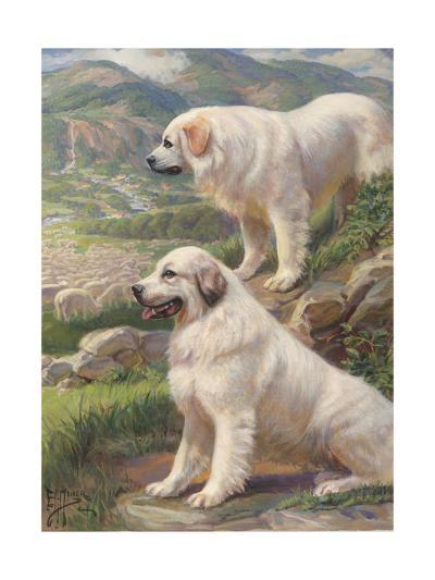 Two Great Pyrenees Dogs Guard a Flock of Sheep--Photographic Print