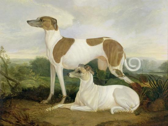 Two Greyhounds in a Landscape-Charles Hancock-Giclee Print