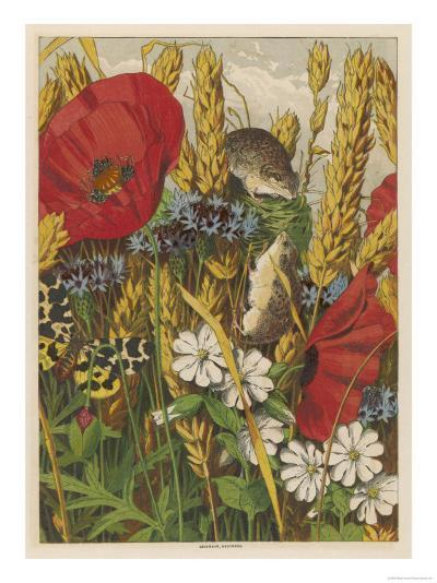 Two Harvest Mice Among the Ears of Corn and Poppies--Giclee Print