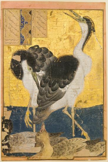 Two Herons with Ducks--Art Print