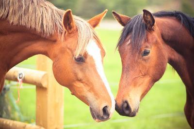Two Horse-Sasha Bell-Photographic Print