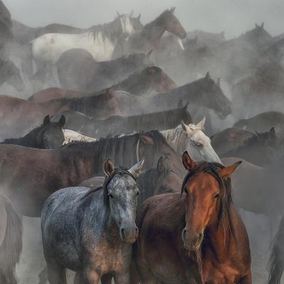 Two Horses-H?seyin Ta?k?n-Photographic Print