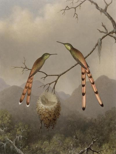 Two Hummingbirds with Their Young, c.1865-Martin Johnson Heade-Giclee Print