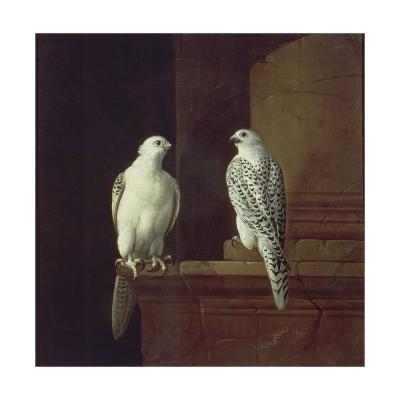 Two Iceland Falcons-Jakob Bogdani Or Bogdany-Giclee Print