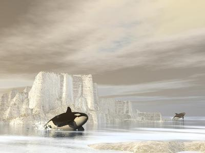 Two Killer Whales Swimming Near Icebergs on a Cloudy Day--Art Print