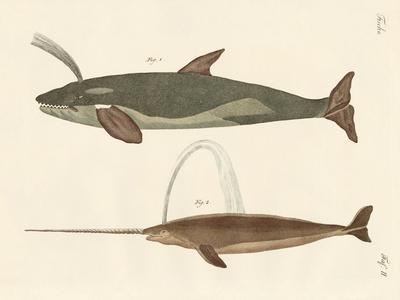 Two Kinds of Whales--Giclee Print
