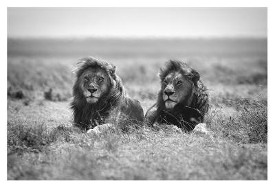 Two Kings-Nicolas Merino-Giclee Print