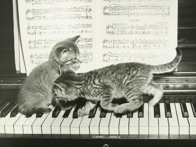 Two Kitten Playing on Piano Keyboard-George Marks-Photographic Print