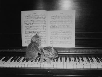 Two Kittens Sitting on Piano Keyboard By Sheet Music-George Marks-Photographic Print