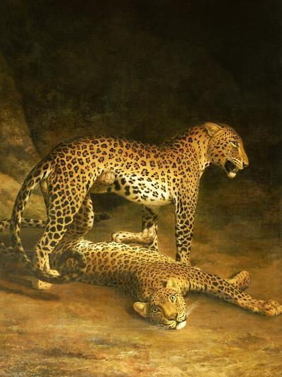 Two Leopards Lying in the Exeter Exchange, 1808-Jacques-Laurent Agasse-Giclee Print