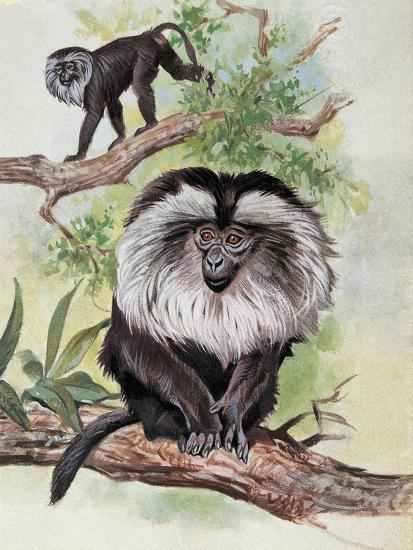Two Lion-Tailed Macaque on a Tree (Macaca Silenus)--Giclee Print